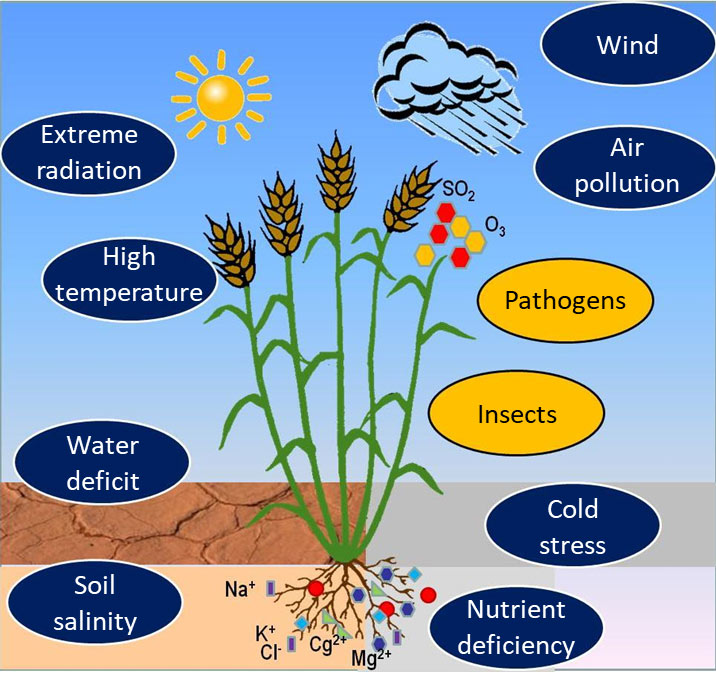 Figure 1. Various abiotic stress affecting plants development and productivity