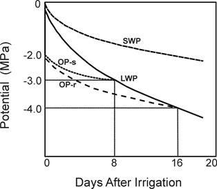 Fig.1. A schematic representation of the components of leaf water status during a soil drying cycle. SWP– soil water potential; LWP- leaf water potential (ψw); OP-s and OP-r represent two different cases of change in osmotic potential (ψs) with the reduction in LWP.