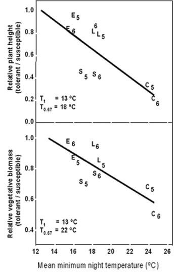 Fig.5. Relative plant height and vegetative biomass of heat-tolerant and heat-susceptible pairs of cowpea lines grown in different fields with contrasting hermal regimes.