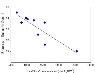 Fig. 3. Relationship between salinity tolerance and leaf Na+ concentration in subspecies durum selections. Na+ concentrations were measured on leaf 3 after 10 d in 150 mM NaCl and biomass after 24 d in control and salt treatments. All values are means (n=5). Munns and James (2003).